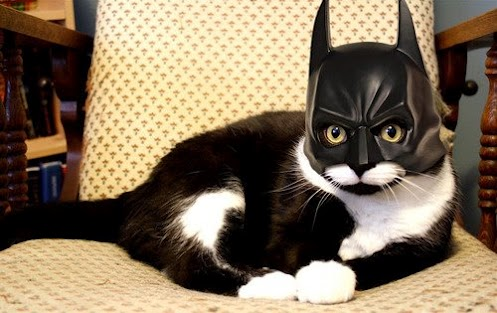Superheroes Based on Cats