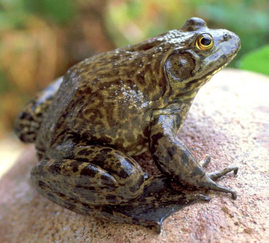 frog-list-01