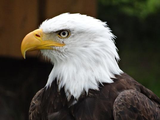 Eagle List 01