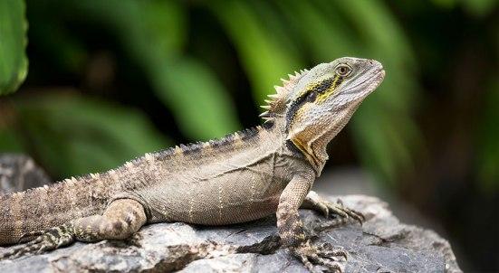 Reptile List 08